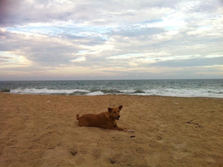 Le chien jaune...à l'oreille coupé.